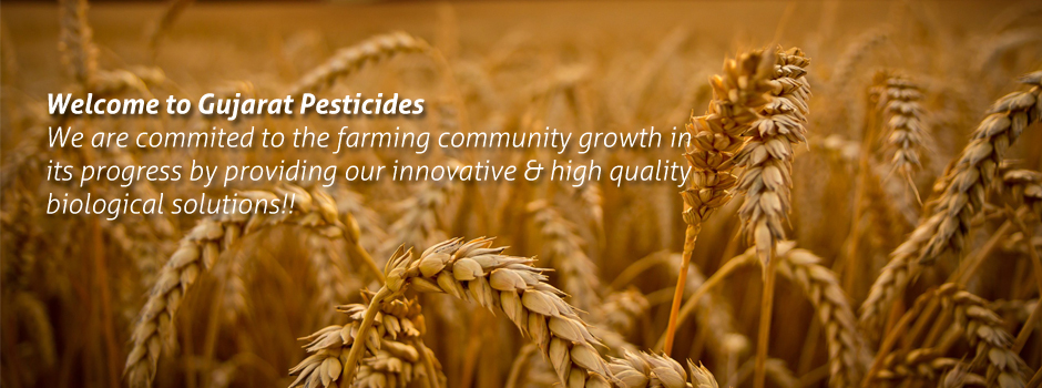 Insecticides & Bio Fertilizer Manufacture, Pesticides Exporter in
